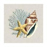 By the Seashore IV Kunstdrucke von Megan Meagher
