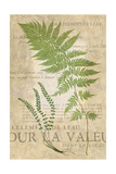 Fern Folio II Posters by  Vision Studio