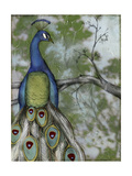 Peacock Reflections II Prints by Jennifer Goldberger