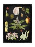 Study in Botany III Kunstdruck von  Vision Studio