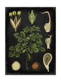 Study in Botany IV Poster von  Vision Studio