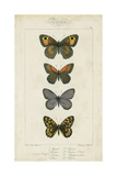 Pauquet Butterflies V Print by  Pauquet