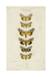 Pauquet Butterflies I Prints by  Pauquet