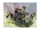 Clif Hadfield - Hadfield Irises IV - Poster