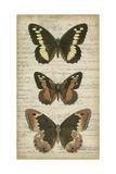 Butterfly Script I Kunstdrucke von  Vision Studio
