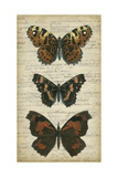 Butterfly Script II Poster von  Vision Studio