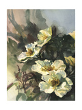 Hadfield Roses II Print by Clif Hadfield