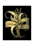 Dramatic Aloe I Kunst von Basilius Besler
