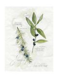 Bay Leaf and Juniper Prints by Elissa Della-piana