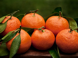 Satsuma Tangerines II Photographic Print by Rachel Perry