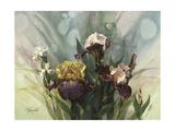Hadfield Irises VI Poster by Clif Hadfield