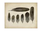 Vintage Feathers VI Prints