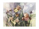 Hadfield Irises V Prints by Clif Hadfield