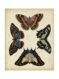 Vision Studio - Display of Butterflies IV - Poster