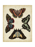 Display of Butterflies IV Posters by  Vision Studio