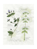 Oregano and Mint Poster by Elissa Della-piana