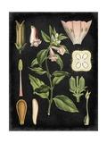 Study in Botany II Plakater af Vision Studio