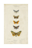 Pauquet Butterflies IV Prints by  Pauquet