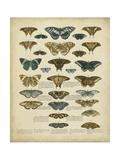Tabula De Papilio Prints by  Sloan