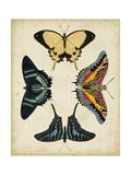 Display of Butterflies III Kunst von  Vision Studio