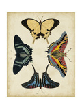 Display of Butterflies III Prints by  Vision Studio