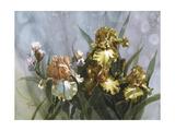 Hadfield Irises I Prints by Clif Hadfield