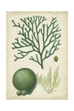 Seaweed Specimen in Green IV Poster von  Vision Studio