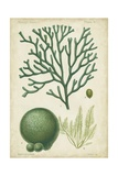 Seaweed Specimen in Green IV Art by  Vision Studio