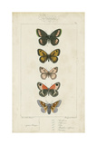 Pauquet Butterflies VI Prints by  Pauquet