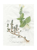 Basil and Thyme Print by Elissa Della-piana