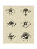 Floral Rosette IV Giclee Print by  Vision Studio