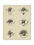 Floral Rosette IV Poster by  Vision Studio