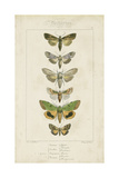 Pauquet Butterflies III Poster by  Pauquet