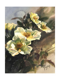 Hadfield Roses I Prints by Clif Hadfield