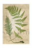 Fern Folio IV Prints by  Vision Studio