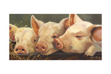 Pig Heaven Poster by Carolyne Hawley