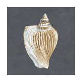 Shell on Slate VI Prints by Megan Meagher