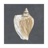 Shell on Slate VI Prints by Megan Meagher