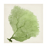 Sea Fan IX Giclee Print by  Vision Studio
