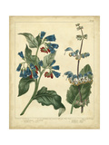 Garden Flora V Posters af Sydenham Edwards