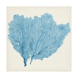 Sea Fan IV Giclee Print by  Vision Studio