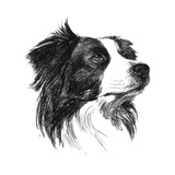 Canine Study I Prints by Ethan Harper