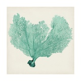 Sea Fan VI Giclee Print by  Vision Studio