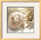 Coral Shell I Art by Donna Geissler