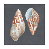 Shell on Slate V Print by Megan Meagher