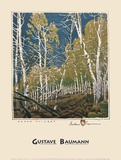 Aspen Thicket Art by Gustave Baumann