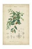 Tropical Botanique VII Print by  Vision Studio