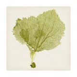 Sea Fan VIII Giclee Print by  Vision Studio