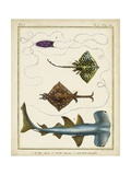Antique Rays and Fish I Giclee Print by Chevillet