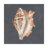 Shell on Slate IX Poster by Megan Meagher